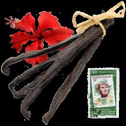 5 Véritables Gousses de Vanille de Tahiti