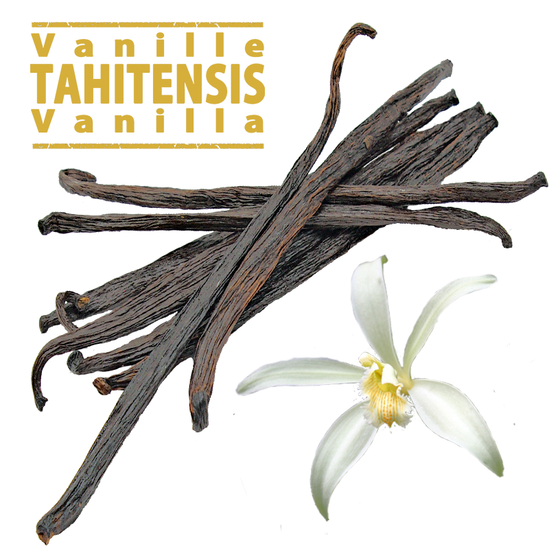 Tahitensis Vanilla Pods / 12 to 15cm / 10 Pods