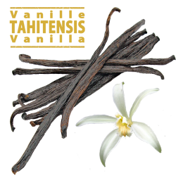 Vanille Tahitensis en gousses / 16 à 17cm / 5 Gousses