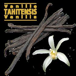 Vanille Tahitensis en gousses / 14 à 16cm / 100gr (environ 35 gousses)