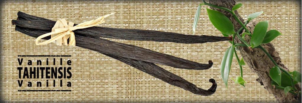 Spicy Deli, Vanilla Tahitensis from Papua New Guinea