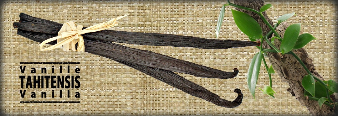 Tahitensis Vanilla Spicy Deli